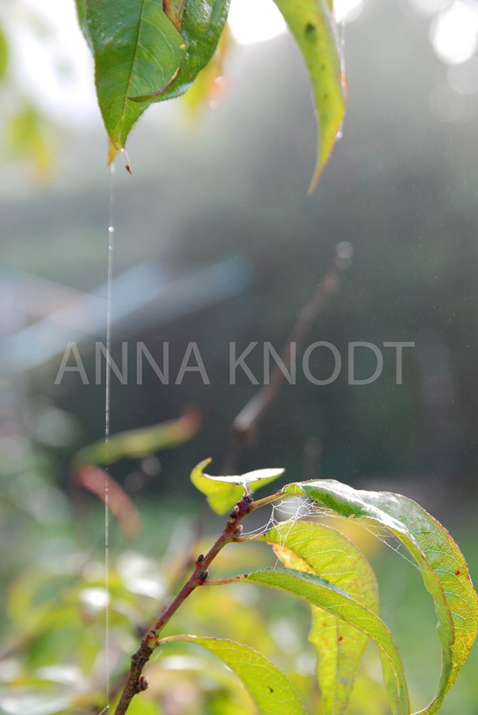 In der Früh #5 Fotografie Anna Knodt